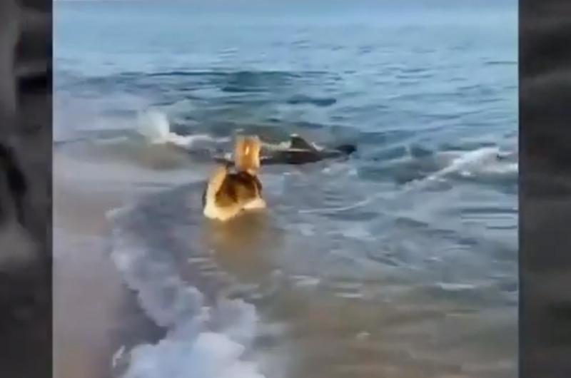 El juego entre un perro y un delfín se vuelve viral