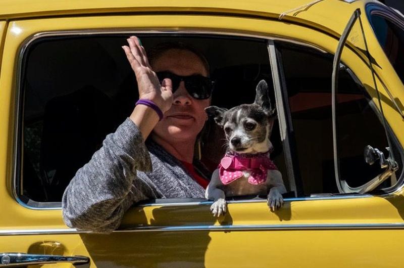 Fiel perrita trabaja como taxista con su padre durante las noches para dar un servicio de lujo