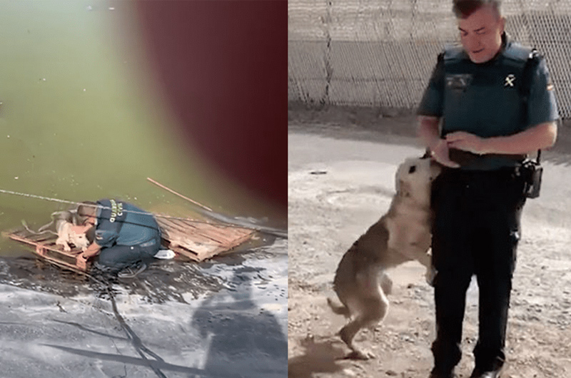 Perro abandonado agradece con tiernos abrazos a policías que lo libraron de ahogarse