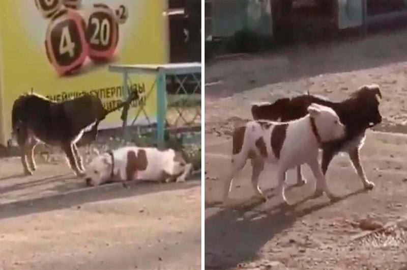 Un perrito de la calle vio a otro perrito en un patio atado y lo liberó