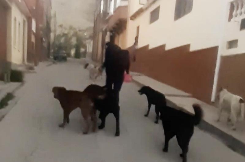 """Agreden a mujer por dar de comer a perritos callejeros: """"Temo que tomen represalias"""""""