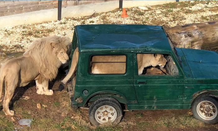 León manejando